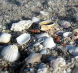 Free Photo - Sea shells on the beach
