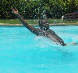 Free Photo - Man Splashing in the Swimming Pool