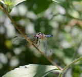 Free Photo - Dragon Fly