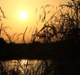 Free Photo - Sunset on the lake with grass silhouette