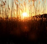 Free Photo - Sunset through grass