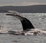 Free Photo - Whale tail