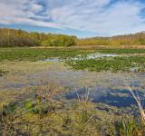 Free Photo - McKee-Beshers Marsh