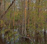 Free Photo - McKee-Beshers Marsh - HDR