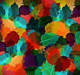 Free Photo - Colorful autumn leaves pattern