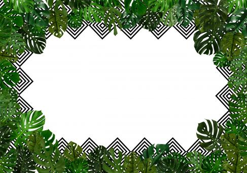 Tropical leaves background with copyspac - Free Stock Photo