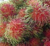 Free Photo - Rambutan Fruits