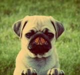 Free Photo - Dog and butterfly - Unlikely friends concept