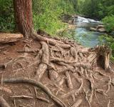Free Photo - Nested Forest Stream - HDR