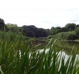 Free Photo - Pond in Southampton