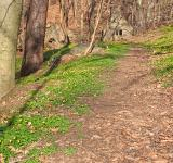 Free Photo - Rustic Spring Trail - HDR