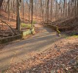 Free Photo - Rustic Forest Trail - HDR