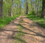 Free Photo - Lush Spring Trail - HDR