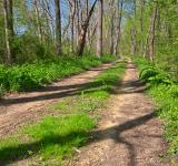 Free Photo - Winding Spring Trail - HDR