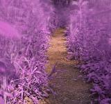 Free Photo - Windy Goose Creek Trail - Lavender Fantasy HDR
