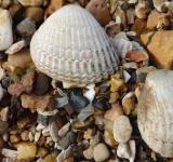 Free Photo - Seashells