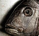 Free Photo - Fish face - Closeup of a snapper