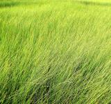 Free Photo - Tall grass - Texture