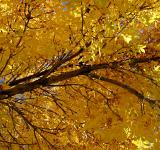Free Photo - Colorado Golden Autumn II