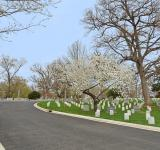 Free Photo - Arlington Cemetery Road - HDR