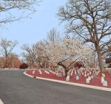 Free Photo - Arlington Cemetery Road - Cerise Pink HDR