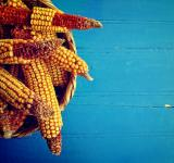 Free Photo - Corn cobs in a basket on rustic blue wooden background
