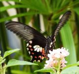 Free Photo - Butterfly on a Flower