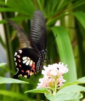 Butterfly on a Flower - Free Stock Photo