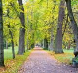 Free Photo - autumn park