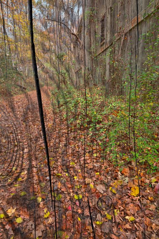 Free Stock Photo of Cracked Wood Autumn Trail Created by Nicolas Raymond
