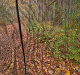 Free Photo - Cracked Wood Autumn Trail