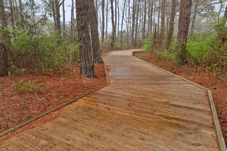Free Stock Photo of Assateague Island Boardwalk Trail - HDR Created by Nicolas Raymond