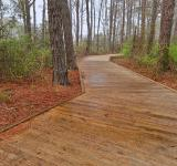 Free Photo - Assateague Island Boardwalk Trail - HDR