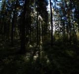 Free Photo - Forest