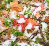 Free Photo - winter snow and autumn leaves