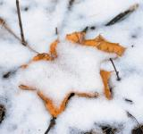 Free Photo - Snow and leaf