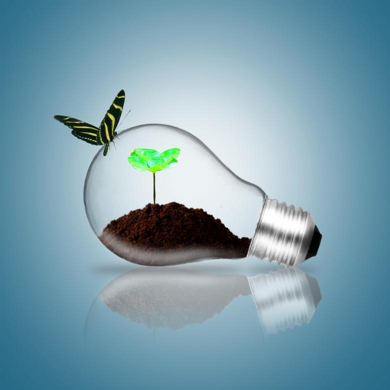 Lightbulb with butterfly and plant sprout - Free Environmental Stock Photos
