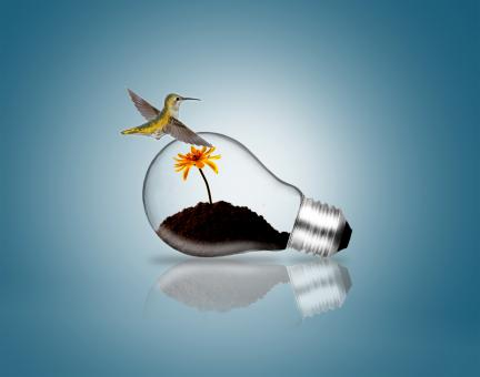 Lightbulb with hummingbird and plant sprout - Free Stock Photo