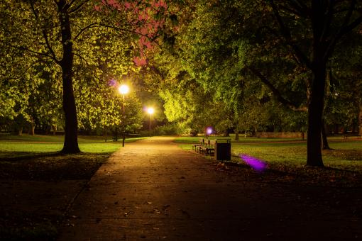 Night in the Park - Free Stock Photo
