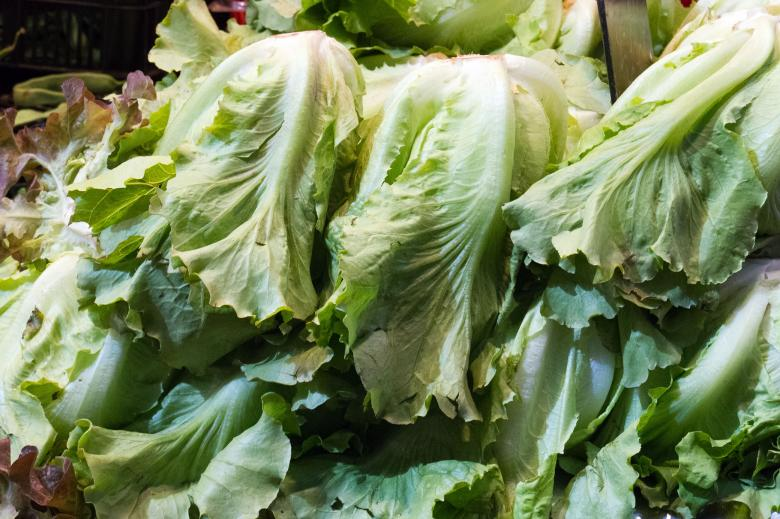 Free Stock Photo of Lettuce Created by Geoffrey Whiteway