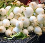 Free Photo - Onions at the Market