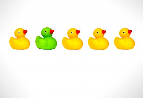 Ducks in a row - Free Stock Photo