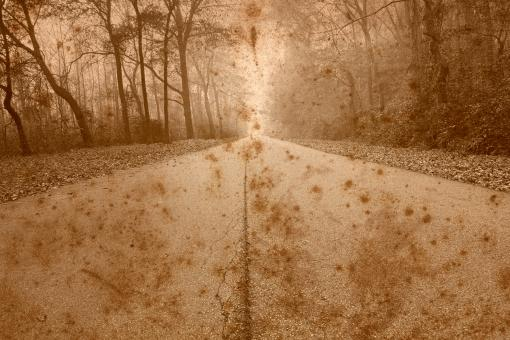 Rustic Forest Road - Free Stock Photo