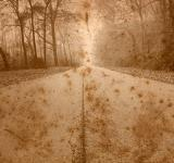 Free Photo - Rustic Forest Road