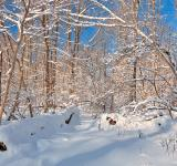 Free Photo - Susquehanna Winter Forest - HDR