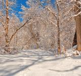 Free Photo - Susquehanna Winter Forest Trail - HDR