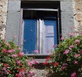 Free Photo - Flowers and Window