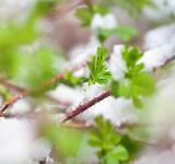 Free Photo - Grass in the snow