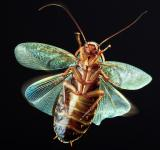 Free Photo - Insect