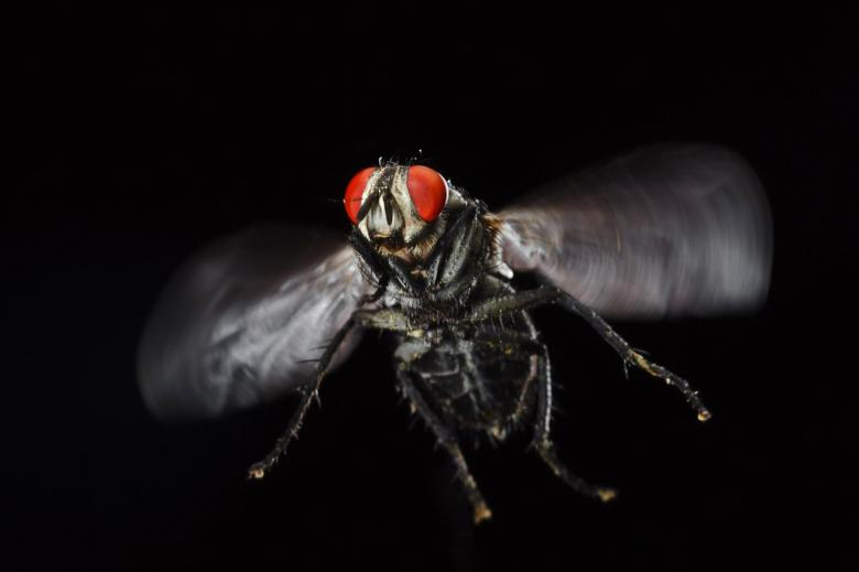 Free Stock Photo of Housefly Created by 2happy